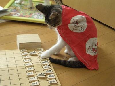 将棋を指す猫sd2.jpg